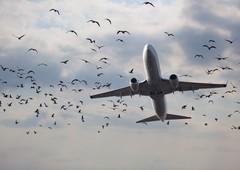 Где есть проездной на авиарейсы по всей стране?