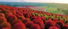 Чарующие красоты Японии в национальном парке Хитачи!