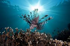 А Вы знали, что на водных просторах Кораллового моря, вдоль северо-восточного побережья солнечной
