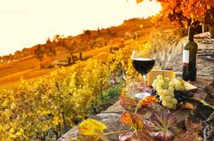 Бургундия - регион живописных виноградников!