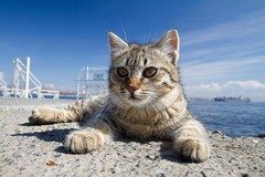 На северо-западе Турции появится деревня для кошек!