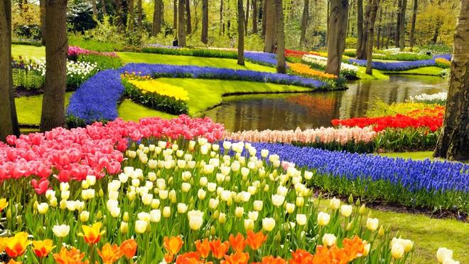 Уже скоро! В голландском парке Кёкенхоф с 23 марта начинается восьминедельный сезон цветения великолепных весенних цветов.
